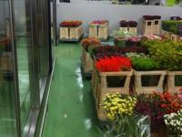glatte Beschichtung mit Dekorchipseinstreuung, Blumengeschäft